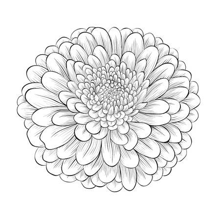 12,029 Chrysanthemum Stock Illustrations, Cliparts And Royalty Free.