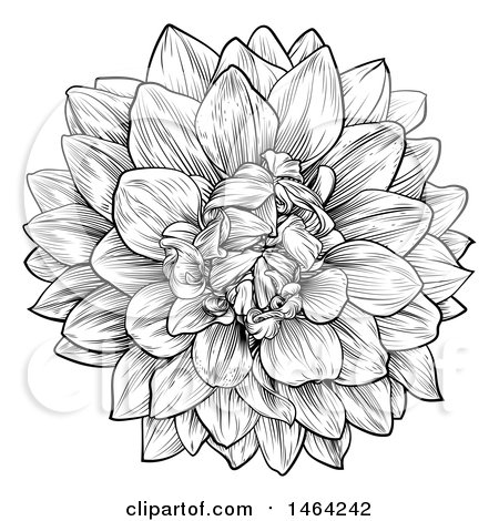 Clipart of a Black and White Dahlia or Chrysanthemum Flower in.