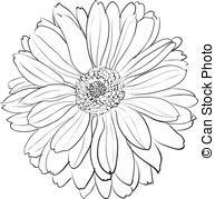 Chrysanthemum Illustrations and Clip Art. 5,291 Chrysanthemum.