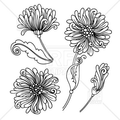 Outlines of buds of a chrysanthemum Vector Image.