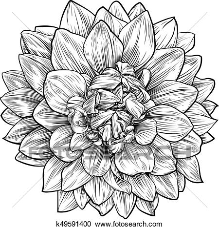 Dahlia or Chrysanthemum Flower Woodcut Etching Clipart.
