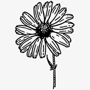 Picture Royalty Free Chrysanthemum Vector Clip Art.