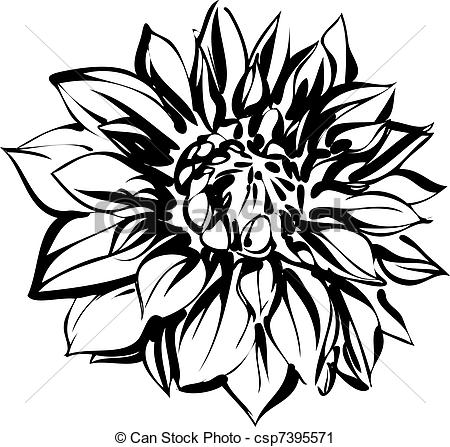 black and white sketch of chrysanthemum.