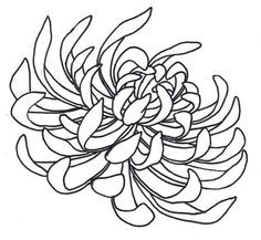 chrysanthemum black and white drawing.
