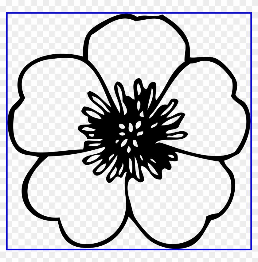 Chrysanthemum Clipart Chrysanthemum Book.