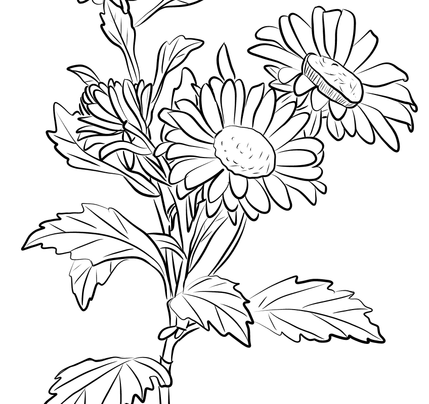 chrysanthemum clip art black white 20 free Cliparts.