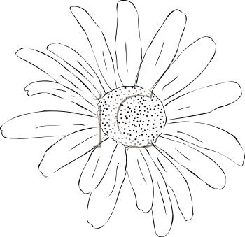 Free Flower Clip Art Black and White.