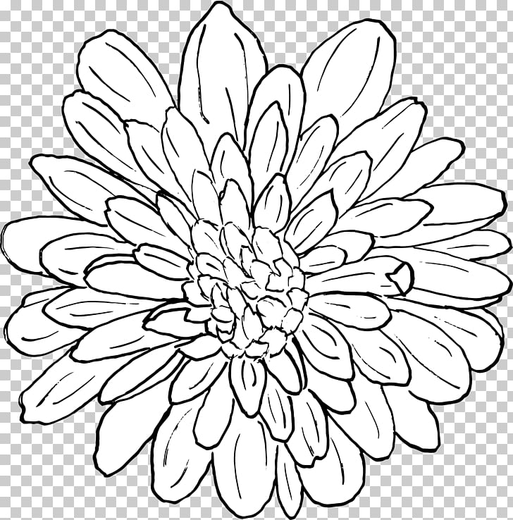Chrysanthemum Floral design Line art Coloring book Pattern.