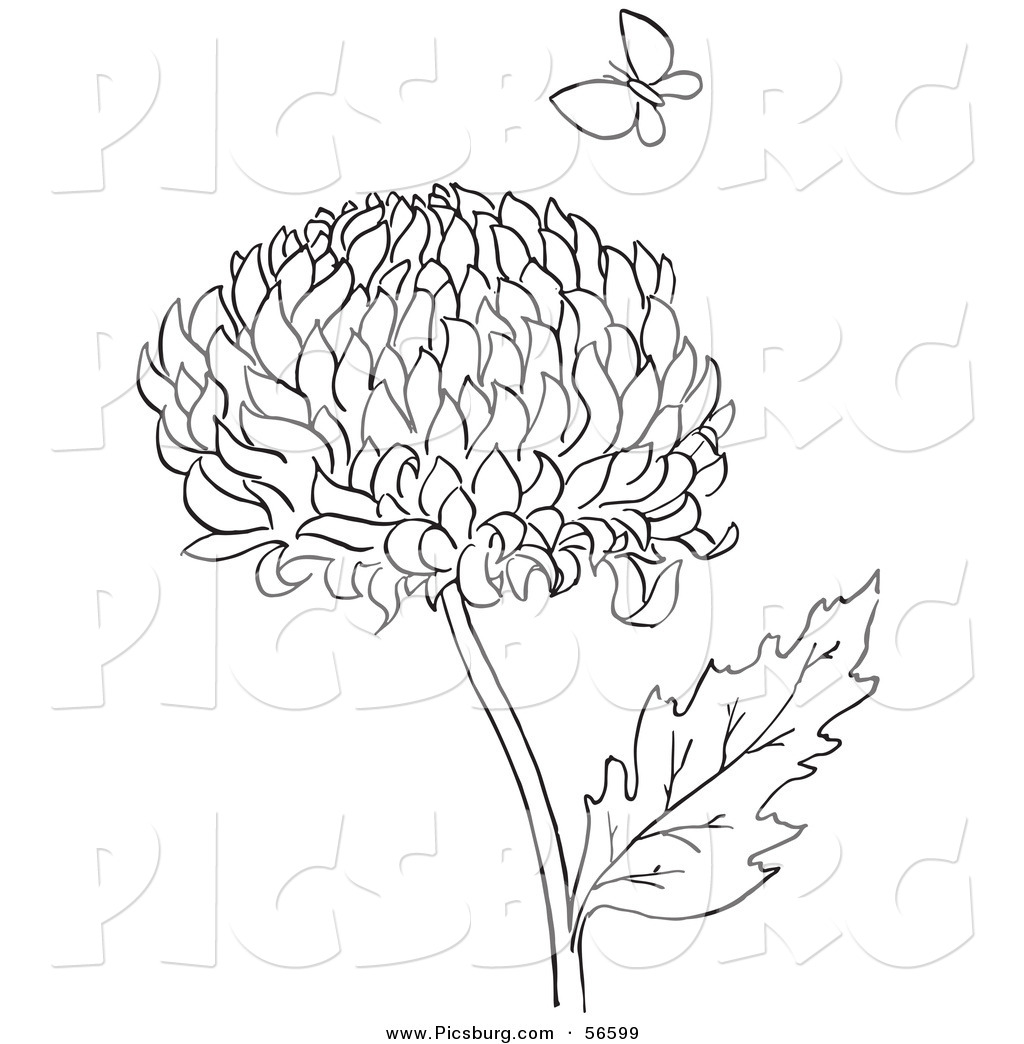 The best free Chrysanthemum drawing images. Download from.
