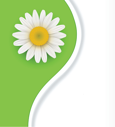 Chrysanthemum Frutescens Clip Art, Vector Images & Illustrations.