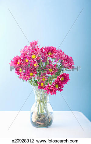 Stock Photo of Vase with purple daisies (Chrysanthemum.