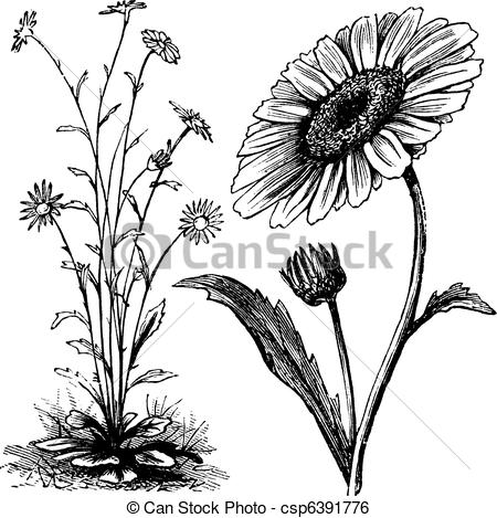 Botanical Clip Art and Stock Illustrations. 56,130 Botanical EPS.