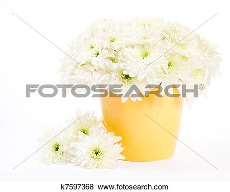 Pictures of White chrysanthemum bouquet in yellow flower pot over.