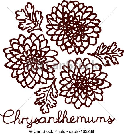 Vectors of Handsketched bouquet of chrysanthemums. Floral label.