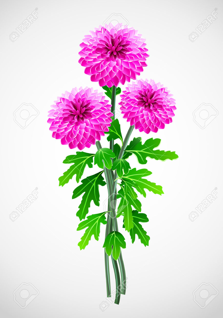 Bouquet Of Red Flower Chrysanthemum Illustration Royalty Free.