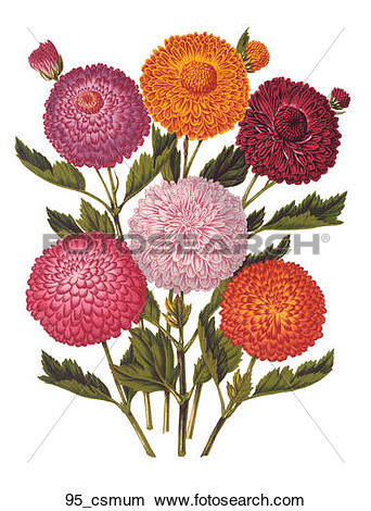 Drawings of Antique Floral Illustration of a Bouquet of.