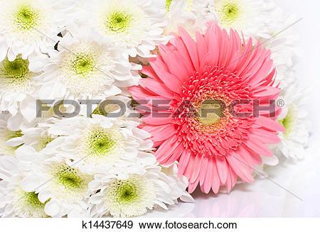 Stock Photograph of a bouquet of chrysanthemums gerbera k14437649.