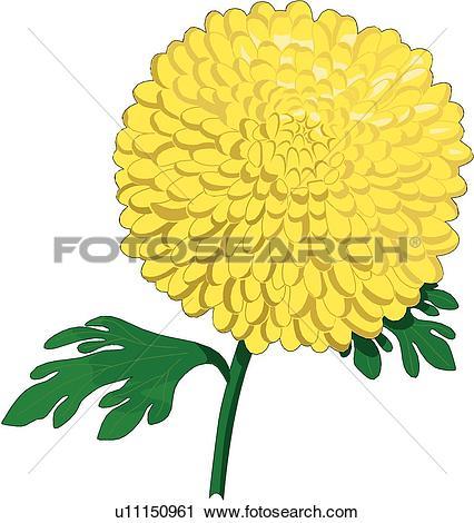 Clip Art of Chrysanthemums u15534638.