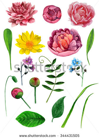 Hand Painted Chrysanthemums Clipart . Hand Painted Peonies Clipart.