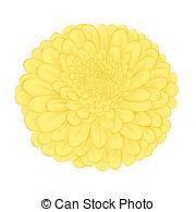 Chrysanthemum Illustrations and Clip Art. 3,154 Chrysanthemum.