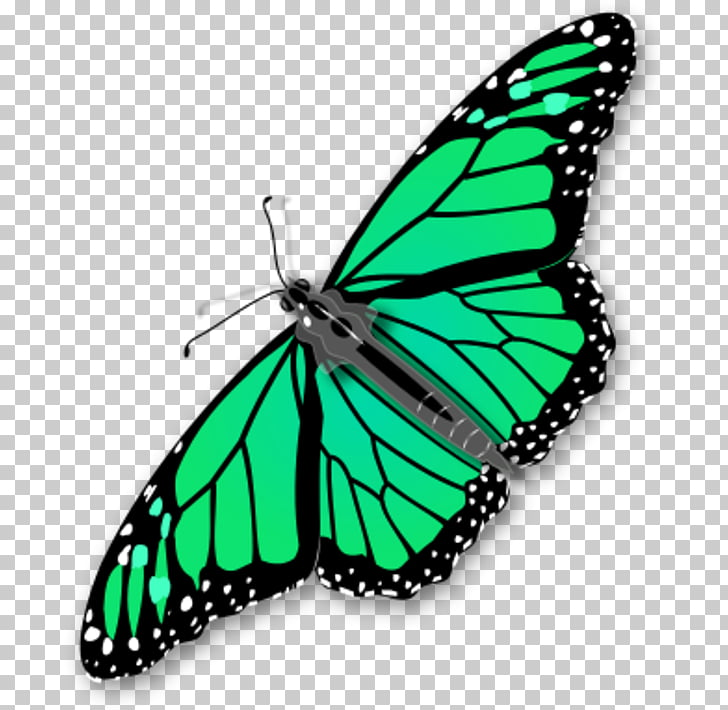 Monarch butterfly , Chrysalis s PNG clipart.