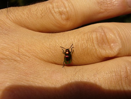 Colorful, Beetle.