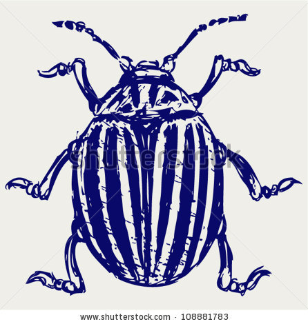 Chrysomelidae Stock Vectors & Vector Clip Art.