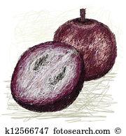 Chrysophyllum cainito Clip Art Illustrations. 5 chrysophyllum.