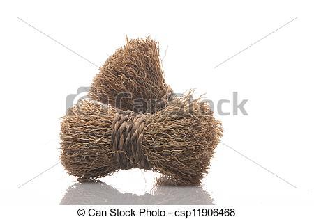 Stock Image of Khas khas Grass.