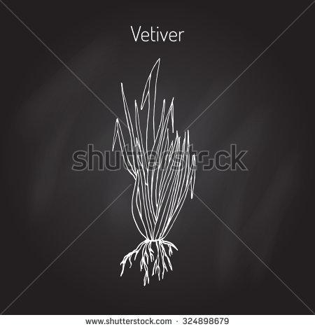 Vetiver Grass Stock Photos, Royalty.