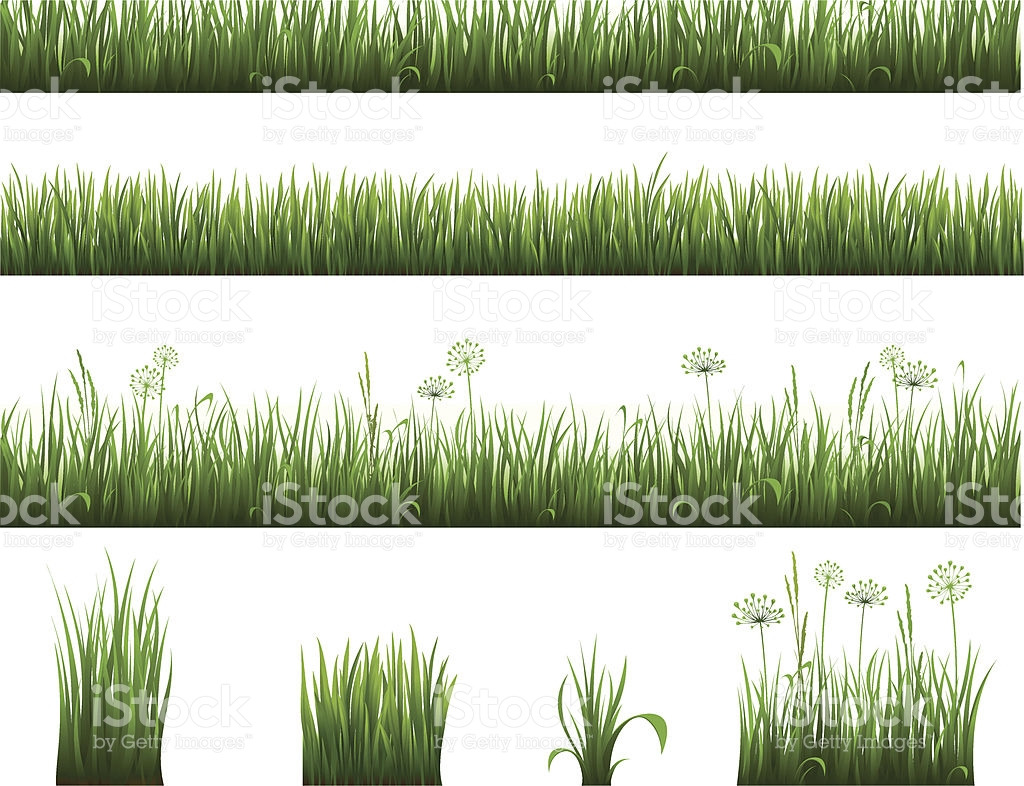 Collection Of Grass stock vector art 165728397.