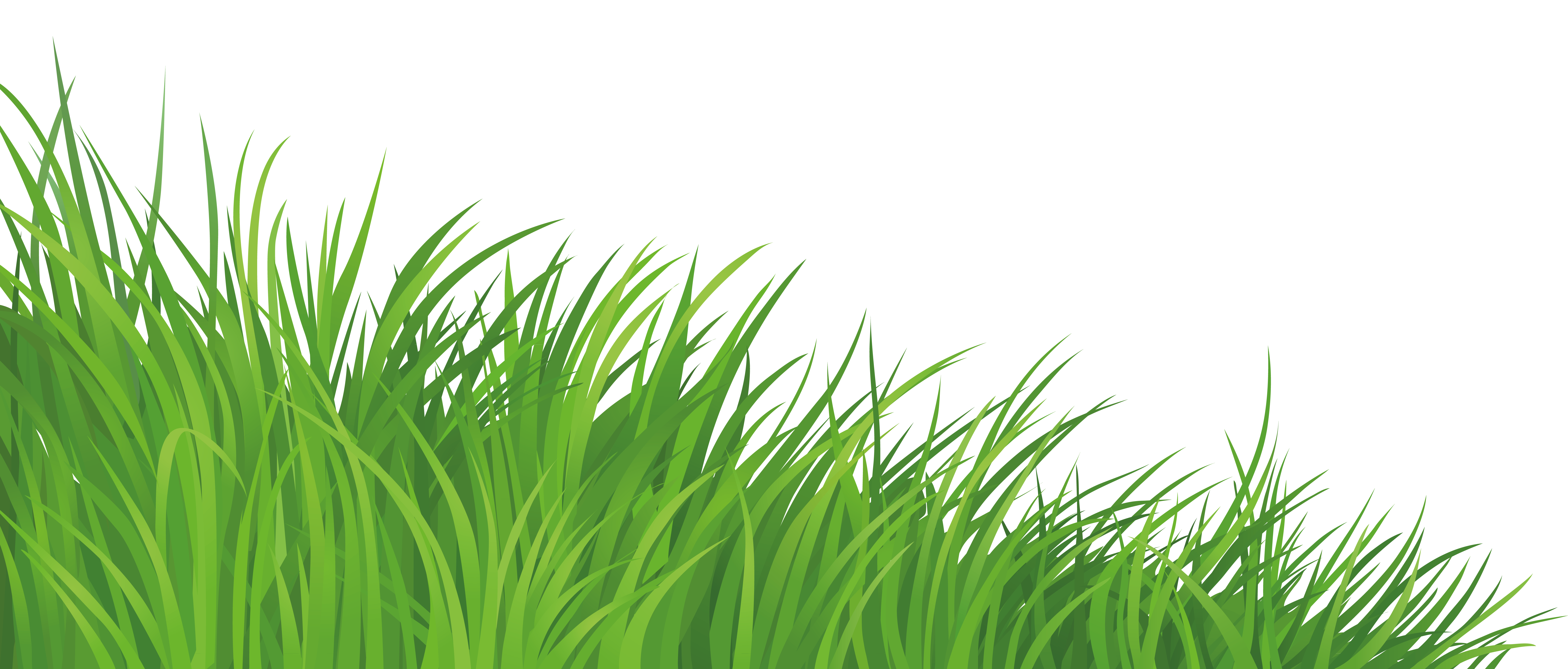 Grass Element PNG Clipart Picture.