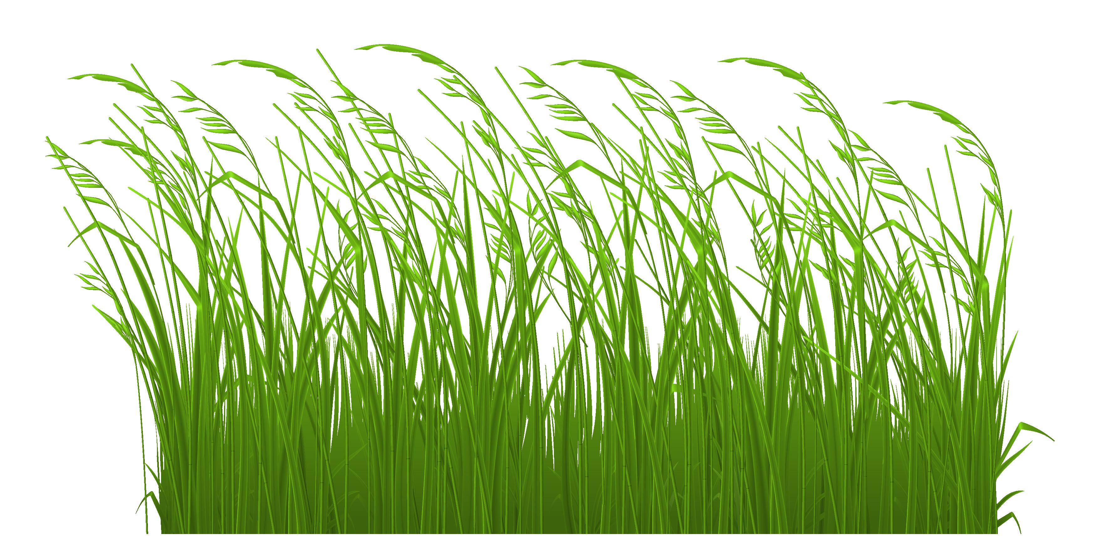Grass Clipart & Grass Clip Art Images.
