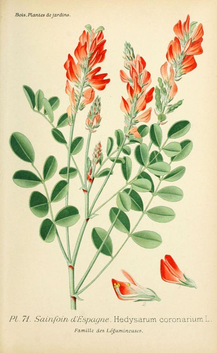 1000+ ideas about Dessin Plante on Pinterest.