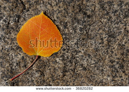 Golden Aspen Leaves Stock Photos, Royalty.