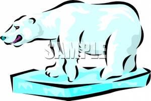 Polar Bear Standing O a Chunk of Ice.