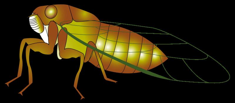 Cicada Clipart.