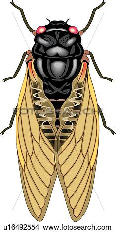 Drawings of Cicada u16492554.