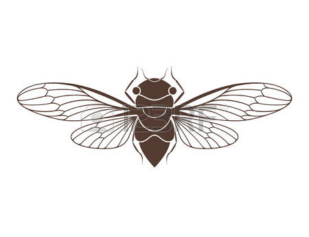 Cicada Stock Photos Images. Royalty Free Cicada Images And Pictures.