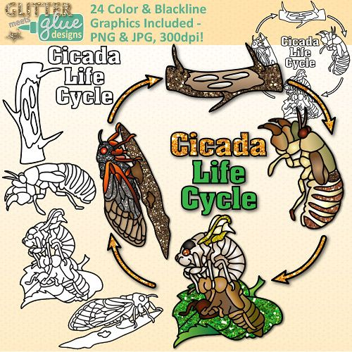 Cicada Life Cycle Clip Art {Great for Animal Groups, Insect, & Bug.