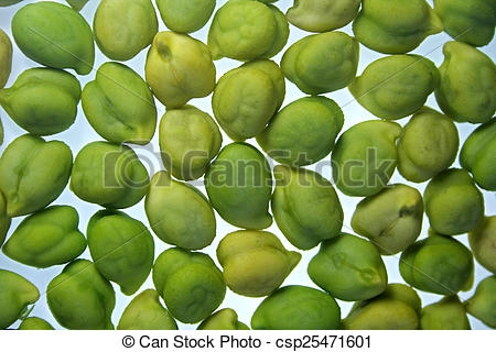 Stock Photography of Close up of cicer arietinum l csp25471601.