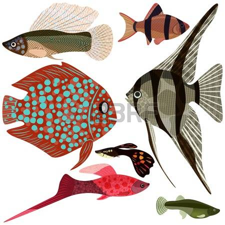 138 Cichlid Stock Illustrations, Cliparts And Royalty Free Cichlid.