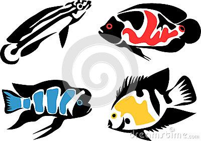 Cichlid Stock Illustrations.