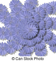 Cichorium intybus Illustrations and Stock Art. 10 Cichorium.