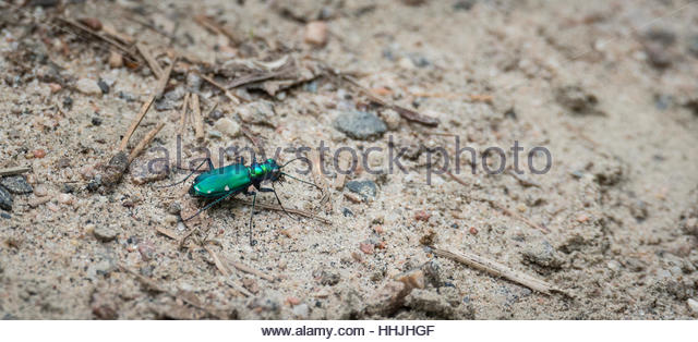 Six Legged Insect Stock Photos & Six Legged Insect Stock Images.