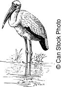 Ciconiidae Clip Art Vector Graphics. 9 Ciconiidae EPS clipart.