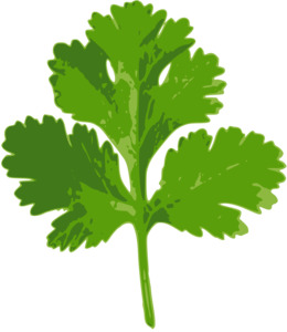 Free Parsley Clipart cilantro, Download Free Clip Art on Owips.com.