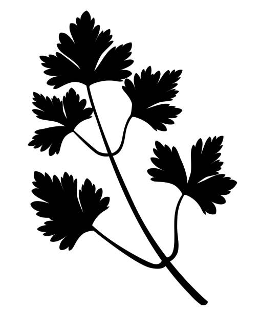 Best Cilantro Leaves Clip Art Illustrations, Royalty.