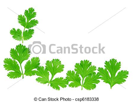 Cilantro Stock Photos and Images. 13,490 Cilantro pictures and.