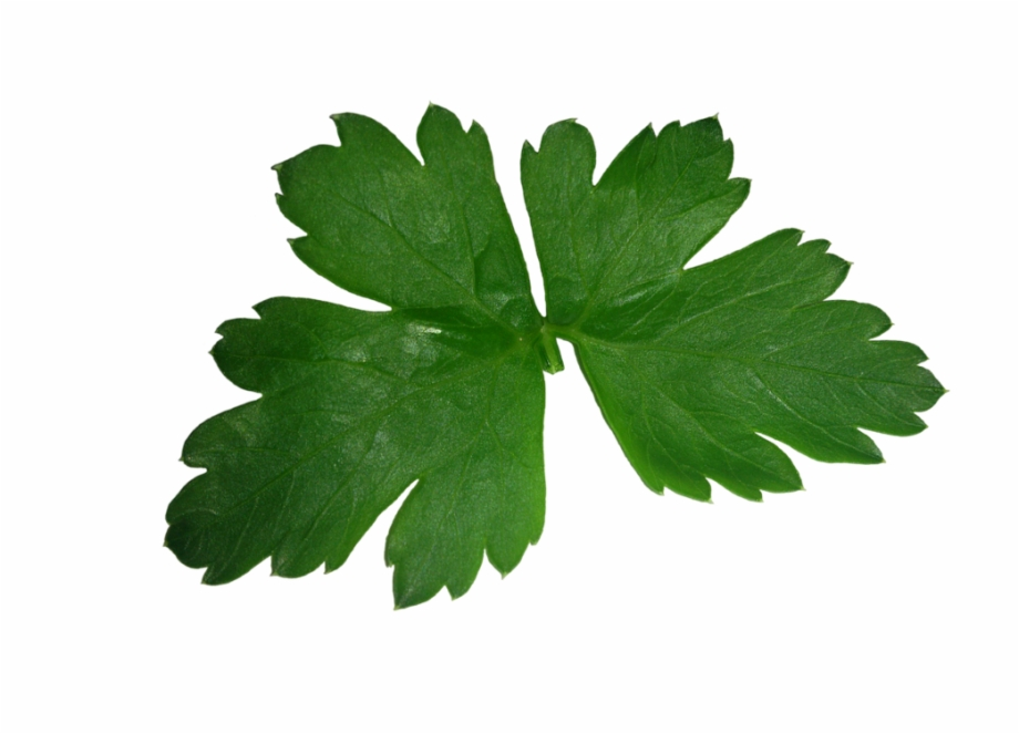 Parsley Leaf High Texture Green Plant.